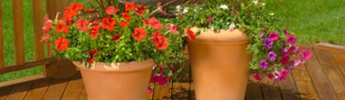 Balkonpflanzen Balkon Kubel Pflanzen Palme Geranien Veilchen