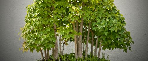 Bonsai Bäume Pflege Schnitt | Bonsaibaum | Gartenbonsai